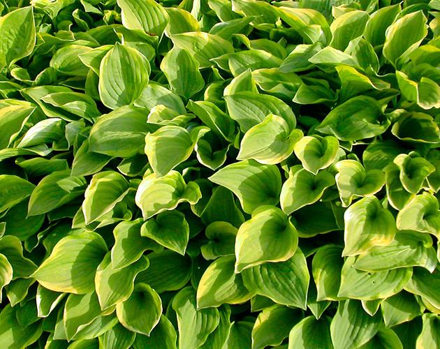 植物の写真-20(フリー素材)