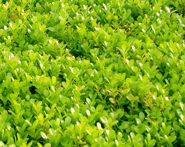 植物の写真-23(フリー素材)