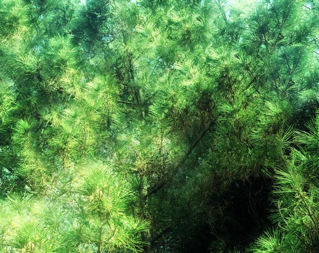 植物・葉・自然のフリー写真素材(ダウンロード25)