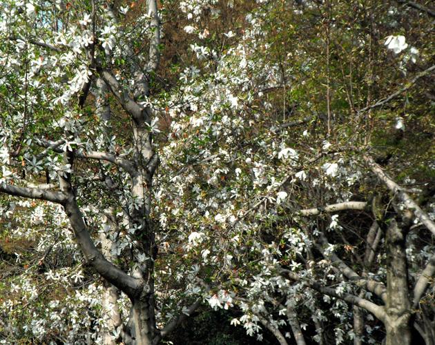植物・葉・自然のフリー写真素材(ダウンロード26)