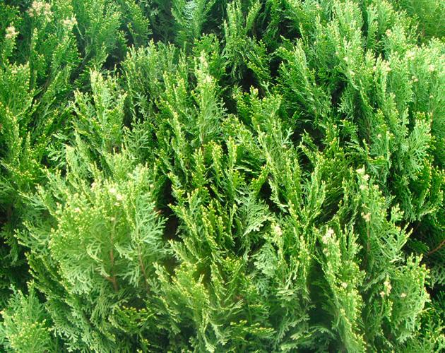 植物・葉・自然のフリー写真素材(ダウンロード27)