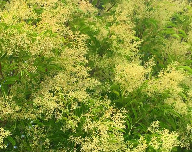 植物の写真-29(フリー素材)