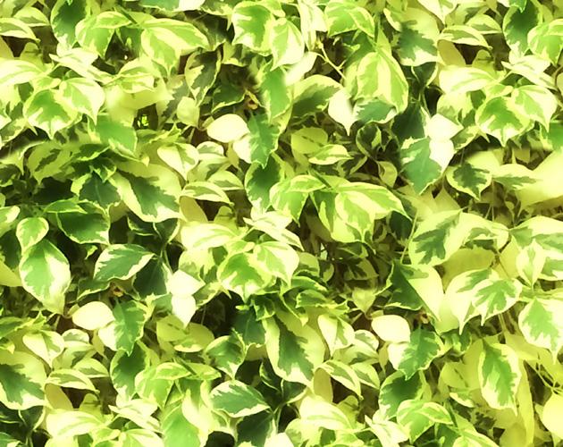 植物の写真-30(フリー素材)