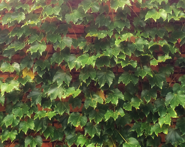植物の写真-31(フリー素材)