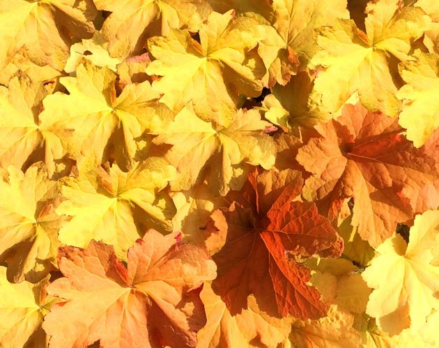 植物・葉・自然のフリー写真素材(ダウンロード32)