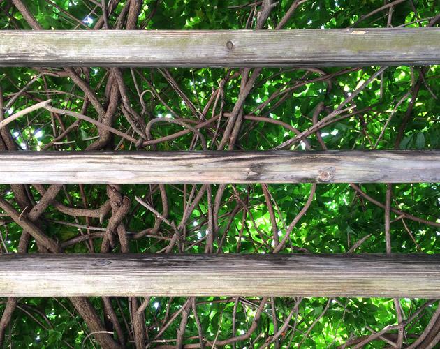 植物・葉・自然のフリー写真素材(ダウンロード33)