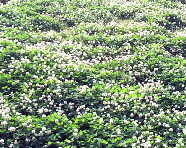 植物・葉・自然のフリー写真素材(ダウンロード34)