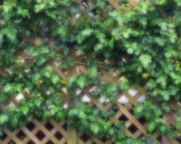 植物の写真-40(フリー素材)