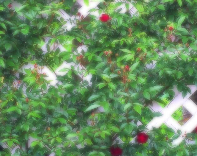 植物の写真-41(フリー素材)