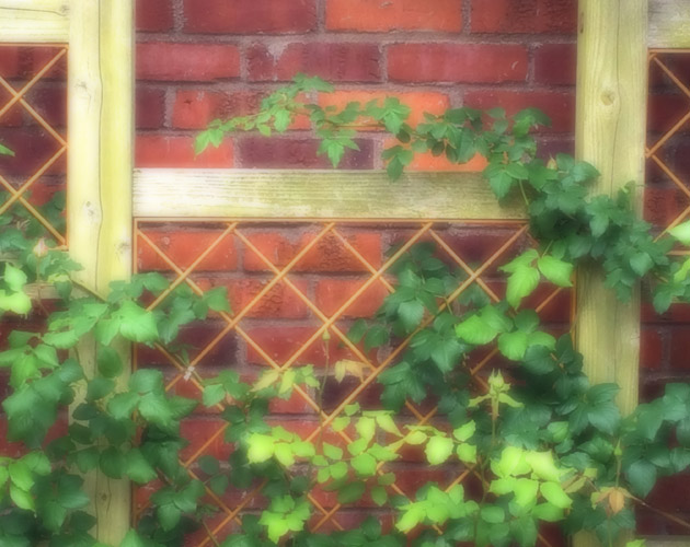植物・葉・自然のフリー写真素材(ダウンロード42)