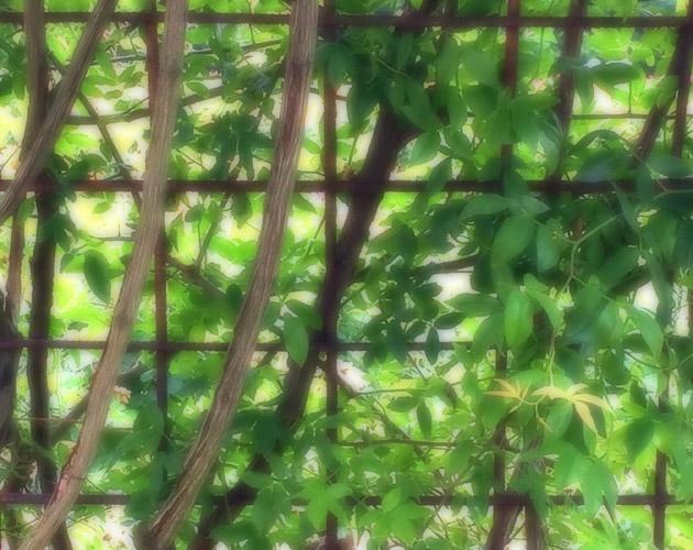 植物の写真-43(フリー素材)