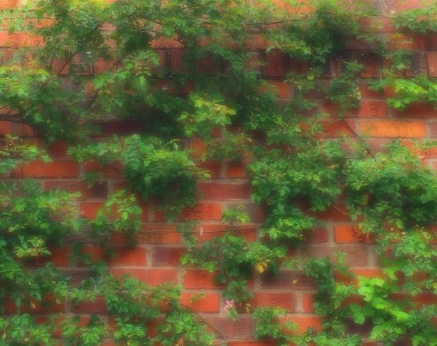 植物・葉・自然のフリー写真素材(ダウンロード44)