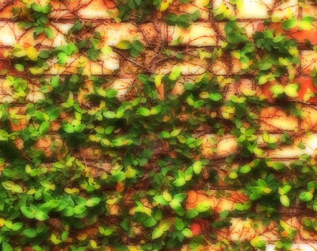 植物の写真-45(フリー素材)
