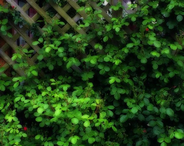 植物の写真-46(フリー素材)