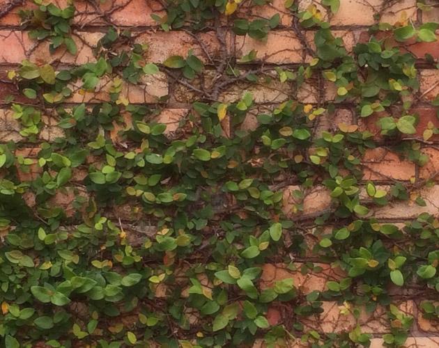 植物の写真-47(フリー素材)
