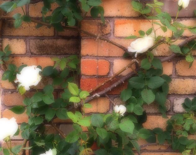 植物・葉・自然のフリー写真素材(ダウンロード49)