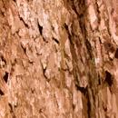 木のフリー背景写真画像(ダウンロード05)